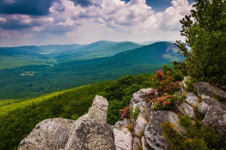 laurel mountain: View of the Trout Run Valley from Tibbet Knob, in George Washington National Forest, West Virginia.