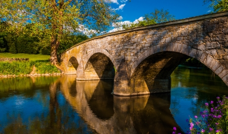 bridge over water: Flowers along Antietam Creek and Burnside Bridge, at Antietam National Battlefield, Maryland.