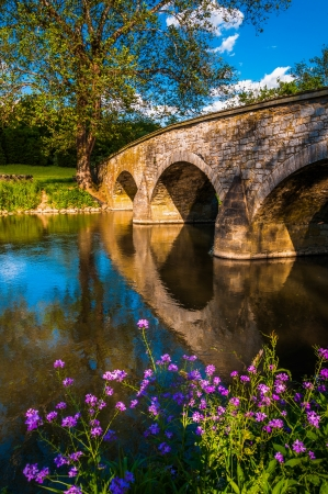 bridge over water: Purple flowers and Burnside Bridge reflecting in Antietam Creek, at Antietam National Battlefield, Maryland.