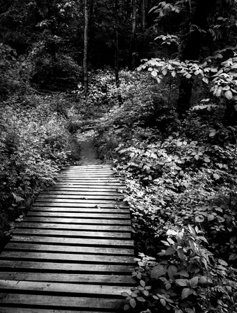boardwalk trail: Black and white of a boardwalk trail and lush spring forest in Codorus State Park, Pennsylvania.