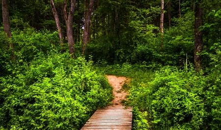 boardwalk trail: Boardwalk trail and lush spring forest in Codorus State Park, Pennsylvania.