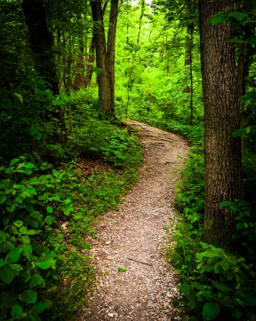 Trail through lush green forest in Codorus State Park, Pennsylvania.