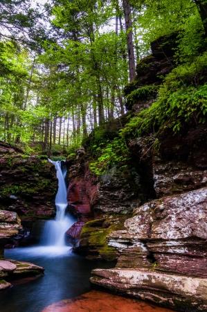Adam's Falls and tall trees in Rickett's Glen State Park, Pennsylvania. 免版税图像