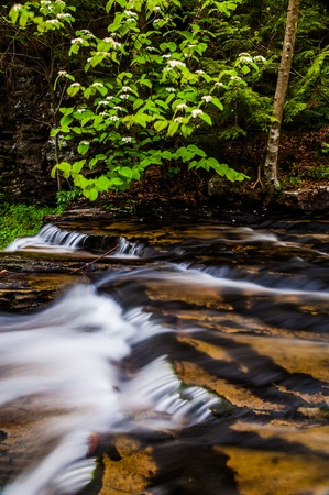 Cascades in Kitchen Creek and a low-hanging dogwood branch at Ricketts Glen State Park, Pennsylvania. Stock Photo - 20759408