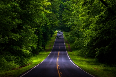 piedmont: Skyline Drive in a heavily shaded forest area of Shenandoah National Park, Virginia.