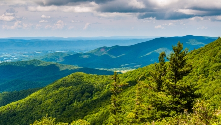 Pine trees and overlook of the Blue Ridge Mountains in Shenandoah National Park, Virginia. Stock Photo - 21005141