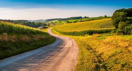 corn field: Farm fields along a country road in rural York County, Pennsylvania.