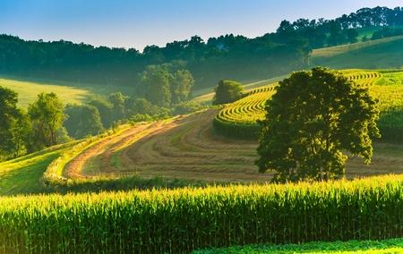 backroad: Farm fields and tree on a hillside in rural York County, Pennsylvania.