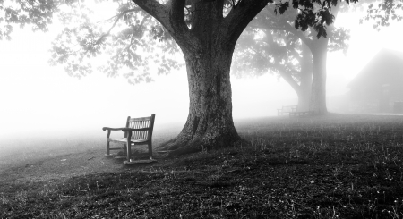 appalachian trail: Benches and trees in fog, behind Dickey Ridge Visitor Center in Shenandoah National Park, Virginia. Stock Photo