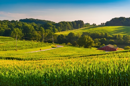 backroad: View of cornfields and a barn in rural York County, Pennsylvania. Stock Photo