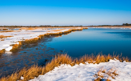 Snow covered wetland at Assateague Island National Seashore, Maryland. photo