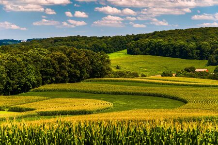 Corn fields and rolling hills in rural York County, Pennsylvania. Stock Photo - 21433458