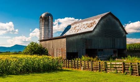 シェナンドア バレー、バージニア州の農場の納屋とトウモロコシの畑。