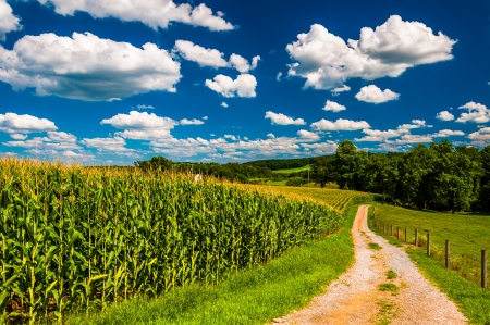 Cornfield and driveway to a farm in rural Southern York County, Pennsylvania.
