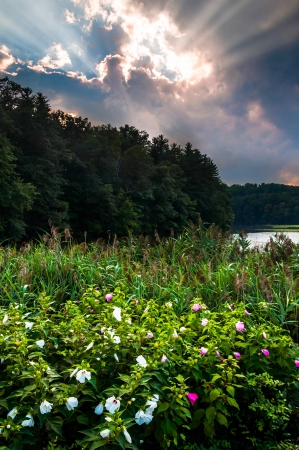 Sunset over flowers along the shore of Lake Williams, near York County, Pennsylvania.