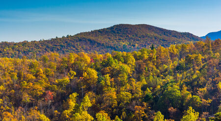 Autumn colors on a mountainside in Shenandoah National Park, Virginia. photo