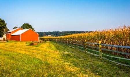 Schuur en maïs veld op een boerderij op het platteland van York County, Pennsylvania.