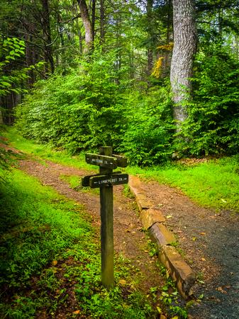 appalachian trail sign: Trail marker along the Limberlost Trail, in Shenandoah National Park, Virginia.