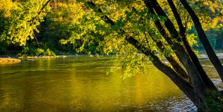 west virginia trees: Tree along the Shenandoah River, in Harpers Ferry, West Virginia.