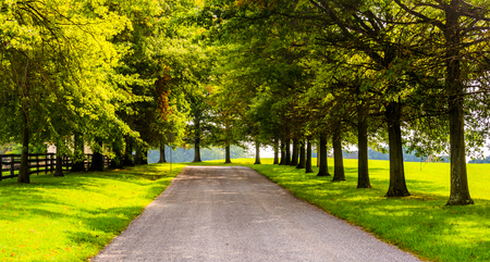 backroad: Trees along a rural backroad in York County, Pennsylvania.