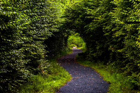 appalachian trail: Tunnel formed by trees on the Limberlost Trail, in a lush forest in Shenandoah National Park, Virginia. Stock Photo