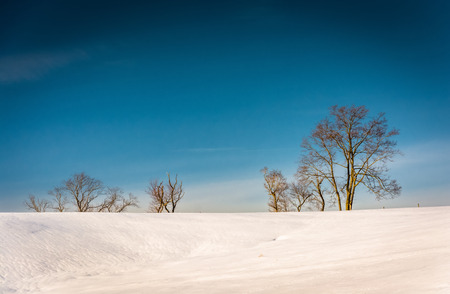 Trees on a snow covered hill in Seven Valleys, Pennsylvania. Stock Photo