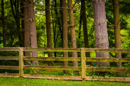 Fence and trees in rural York County, Pennsylvania. photo