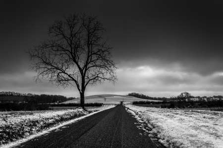 Tree along a road through snow covered farm fields in rural York County, Pennsylvania.