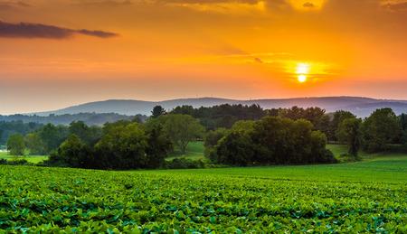 農地と農村ヨーク郡、ペンシルバニア州の Piegon の丘に沈む夕日。