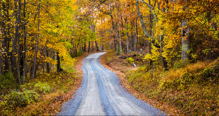 frederick street: Autumn color along a dirt road in Frederick County, Maryland. Stock Photo
