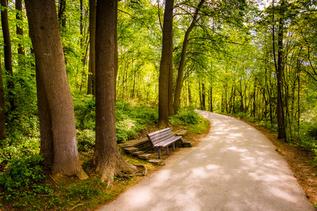Bench along a path through the forest at Centennial Park in Columbia, Maryland. Stock Photo