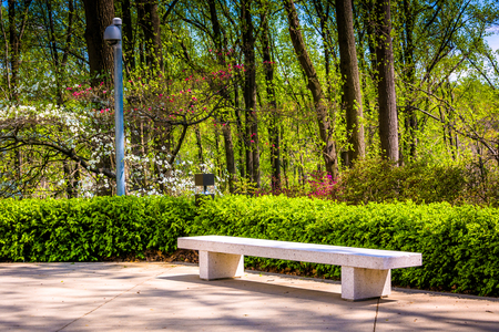 lds: Bench and spring color at the Washington DC Mormon Temple in Kensington, Maryland.
