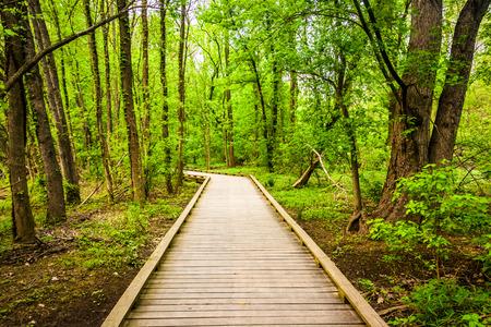 wildwood: Boardwalk trail through the forest at Wildwood Park in Harrisburg, Pennsylvania.