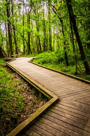 boardwalk trail: Boardwalk trail through the forest at Wildwood Park in Harrisburg, Pennsylvania.