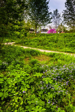 wildwood: Flowers and a path at Wildwood Park in Harrisburg, Pennsylvania. Stock Photo