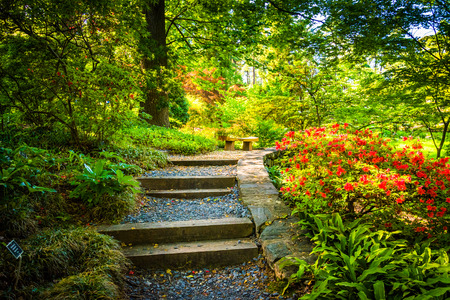 arboretum: Path through a colorful garden at the National Arboretum in Washington, DC.