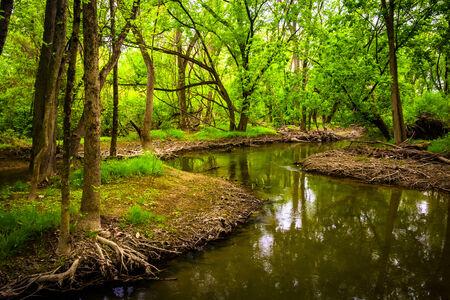 wildwood: Stream at Wildwood Park, in Harrisburg, Pennsylvania.