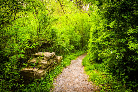 wildwood: Trail through the forest at Wildwood Park, Harrisburg, Pennsylvania. Stock Photo