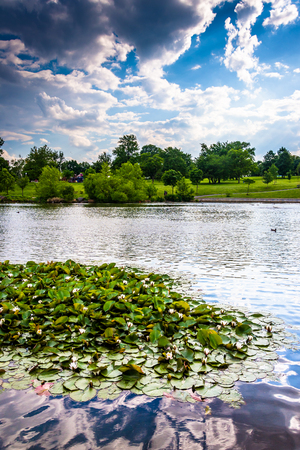 Lily pads in the pond at Patterson Park in Baltimore, Maryland. photo