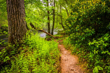 river county: Trail along the Gunpowder River, near Prettyboy Reservoir in Baltimore County, Maryland. Stock Photo