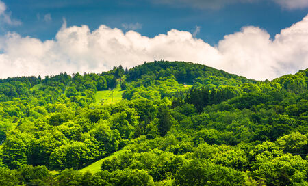 west virginia trees: Summer view of ski slopes at Canaan Valley State Park, West Virginia.