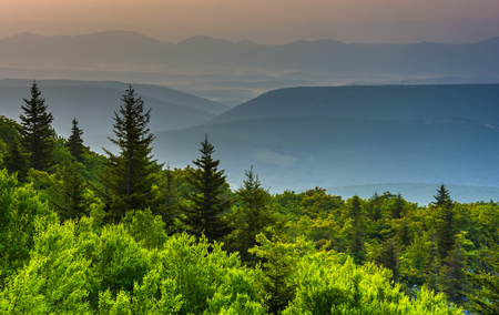 west virginia trees: Pine trees and distant mountains, seen from Bear Rocks Preserve, Monongahela National Forest, West Virginia.