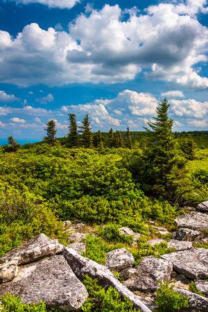 west virginia trees: Rocks and pine trees at Bear Rocks Preserve, Monongahela National Forest, West Virginia. Stock Photo
