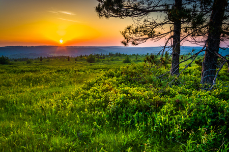 allegheny: Sunset at Dolly Sods Wilderness, Monongahela National Forest, West Virginia.