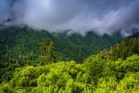 newfound gap: Low clouds over mountains, seen from Newfound Gap Road in Great Smoky Mountains National Park, Tennessee.