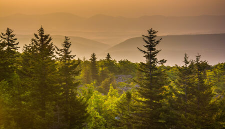 west virginia trees: Pine trees and distant mountains at sunrise, seen from Bear Rocks Preserve, Monongahela National Forest, West Virginia.