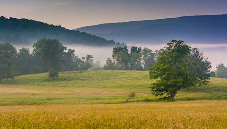 west virginia trees: View of trees in a farm field and distant mountains on a foggy morning in the rural Potomac Highlands of West Virginia.