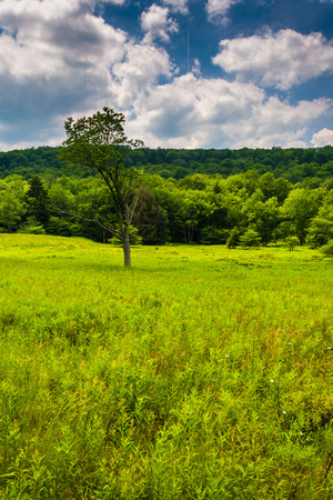 west virginia trees: Meadow and trees at Canaan Valley State Park, West Virginia.