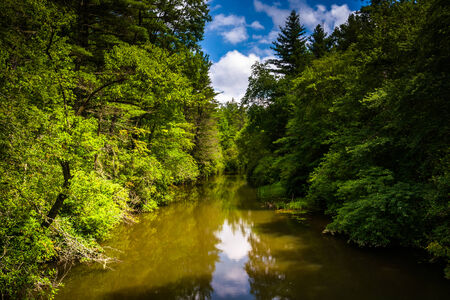 The Little River, in Dupont State Forest, North Carolina. Stock Photo
