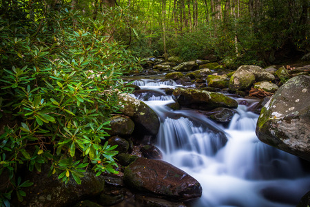 great smokies: Cascades on Roaring Fork, in Great Smoky Mountains National Park, Tennessee. Stock Photo